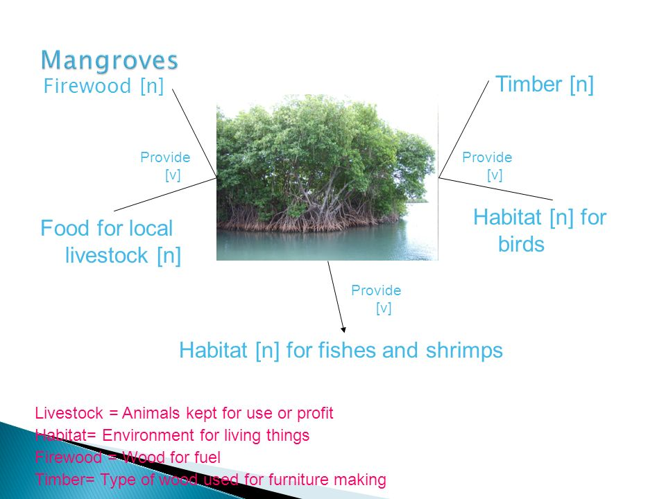 Mangroves Timber [n] Habitat [n] for birds